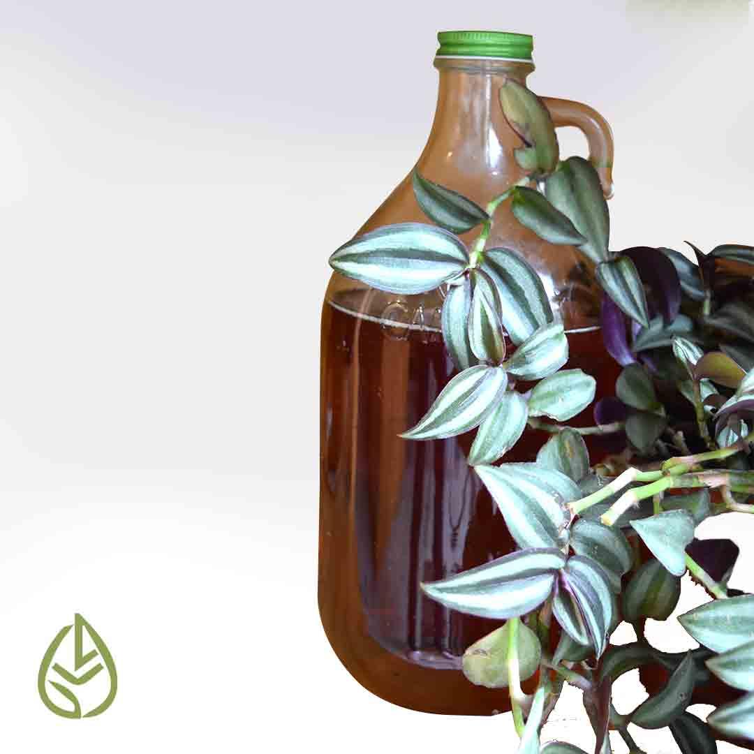 miel agave organica endulzante germina tienda a granel zero waste mexico